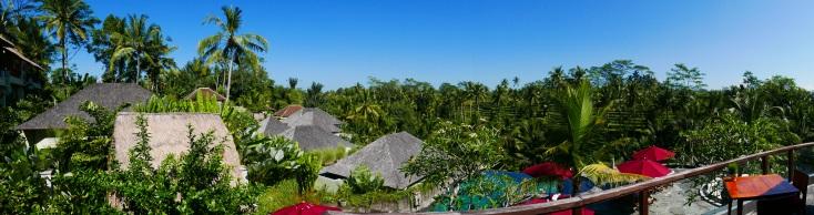 Rice paddies in the sunshine