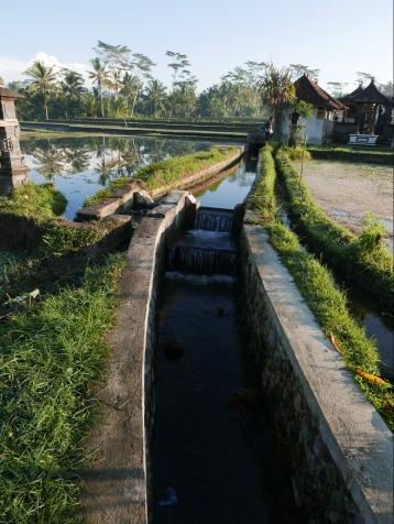Bali, Ubud, Indonesia, Rice Paddy